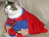 fat-cat-superman