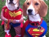 superhero-435